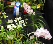 Central New England Orchid Society